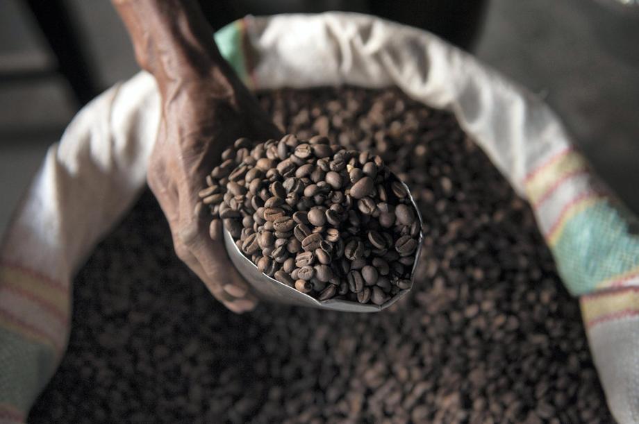 Café arábica colhido na Etiópia: cultivo de grão para tipo popular da bebida ameaçado por calor excessivo, precipitação baixa e chuvas imprevisíveis (Foto: WWF)