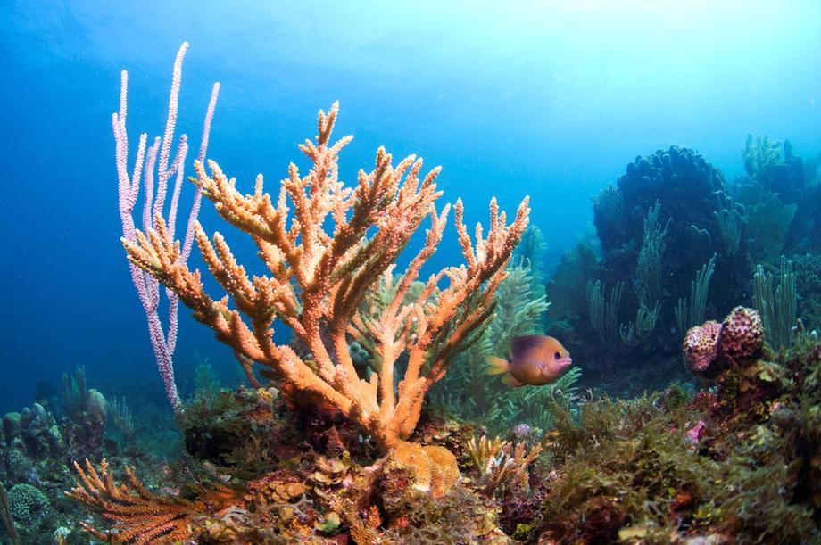 Recifes de coral na costa australiana: em risco por conta do aumento da acidez e o aquecimento dos oceanos (Foto: WWF)