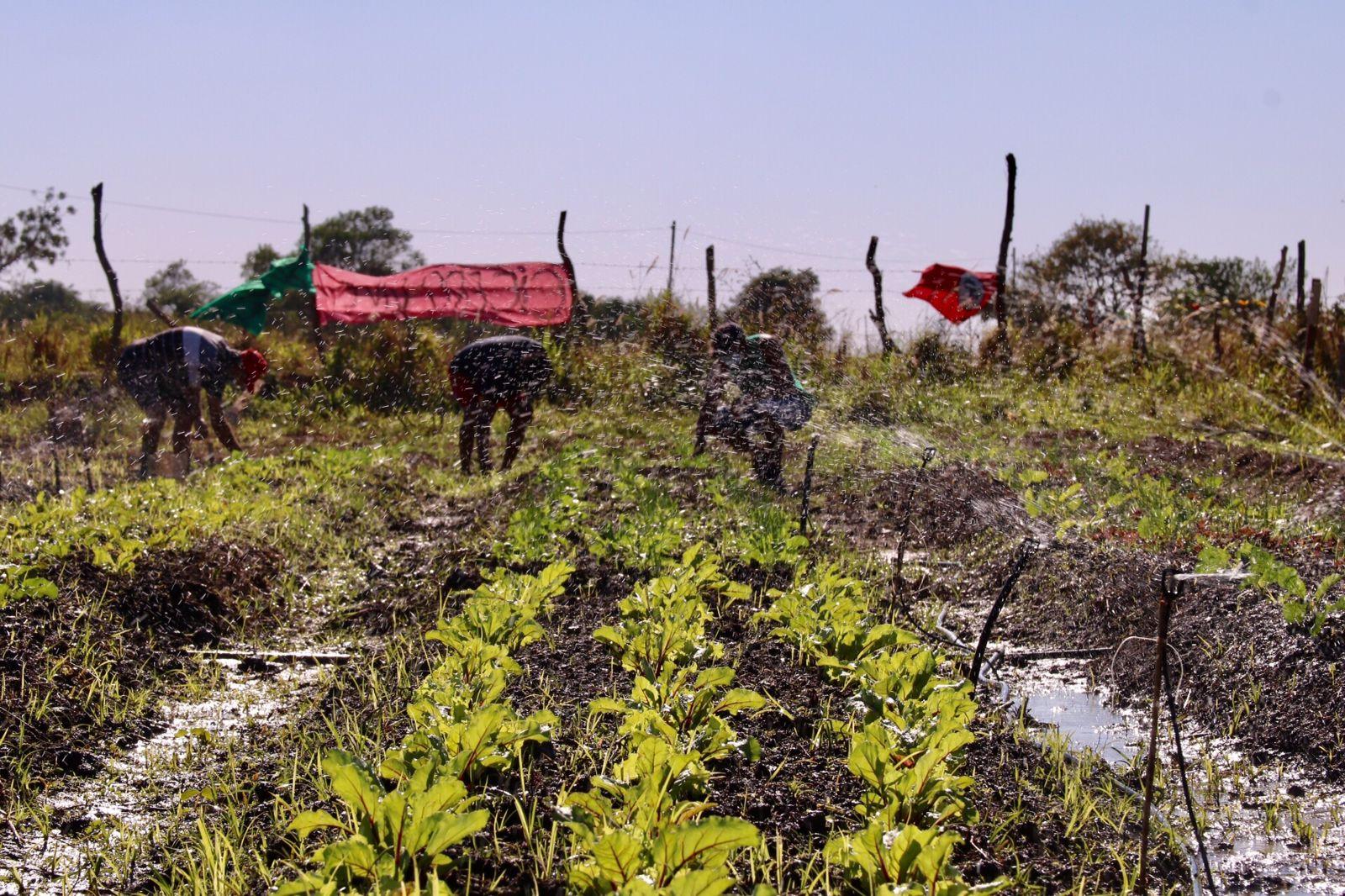Horta comunitária no Acampamento Cícero Guedes: para professor da Uenf, iniciativa do MST no Rio pode ser exemplo para novo modelo de produção agroecológica (Foto: Vivi Fernandes de Lima)