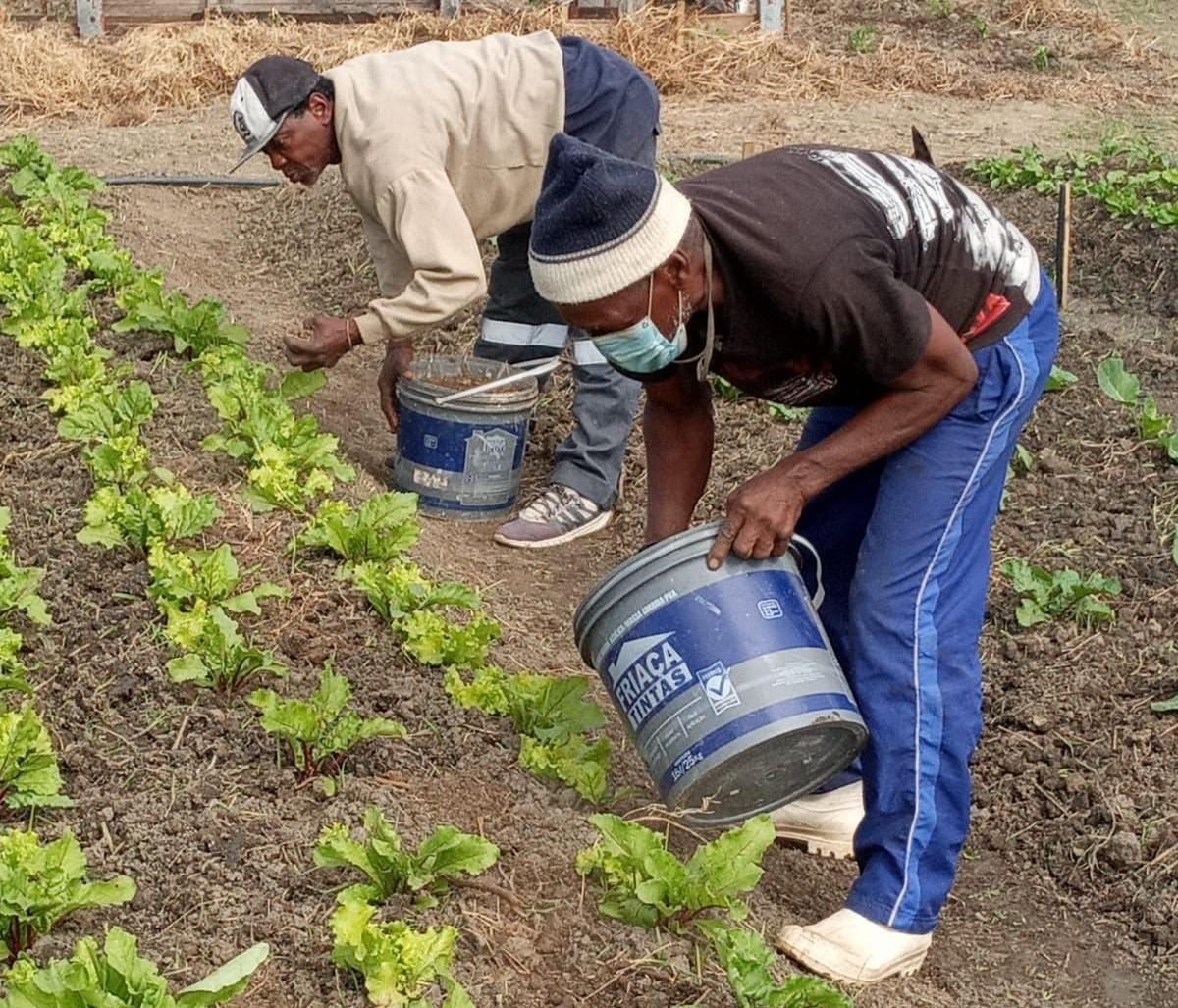 Plantação de mudas de hortaliça no acampamento do MST: primeiros alimentos orgânicos colhidos três meses após Justiça garantir posse da terra (Foto: Pablo Vergara/MST)